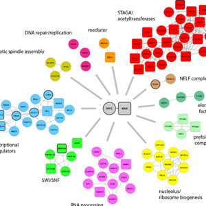 BioID identifies novel c-MYC interacting partners in cultured cells and xenograft tumors.