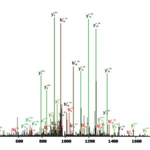 Identification of c-MYC SUMOylation by mass spectrometry.
